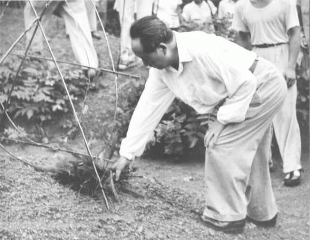 1959年6月26日毛泽东用松枝为父母上坟