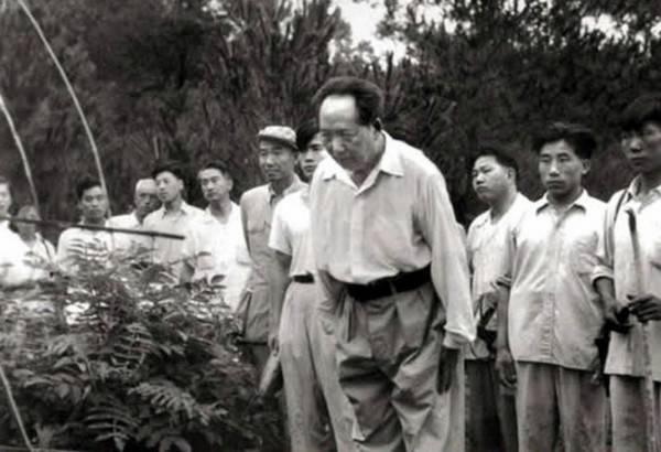 1959年6月26日毛泽东在父母墓前鞠躬