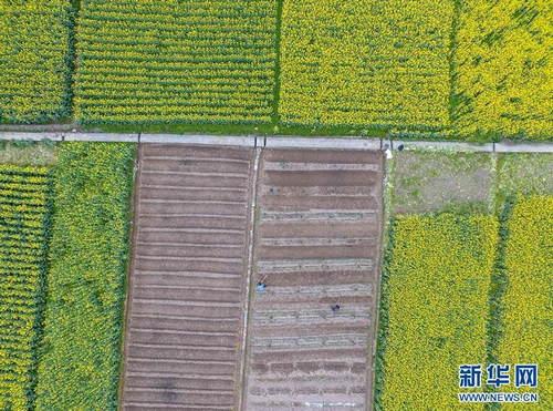 3月5日,在贵州省遵义市余庆县白泥镇满溪村,村民在农田里劳作。