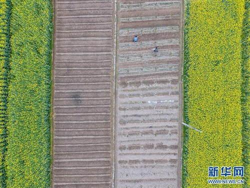 这是3月5日航拍的贵州省遵义市余庆县白泥镇满溪村的农田。