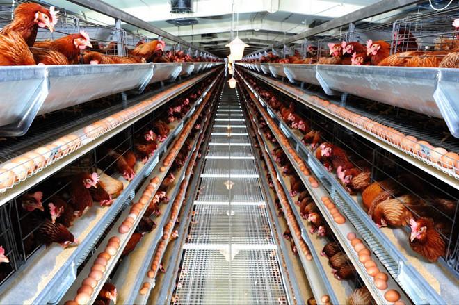规范 标准 揭秘兰州正大食品生产流程