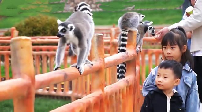 兰州野生动物园试营业首日迎来2000多名游客体验