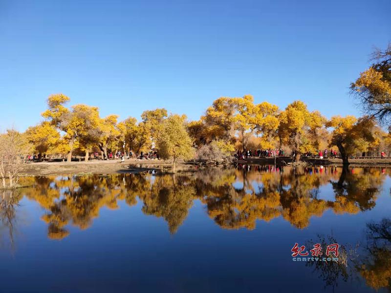 内蒙古额济纳胡杨林 千姿百态 3000年的等待 只为你的到来