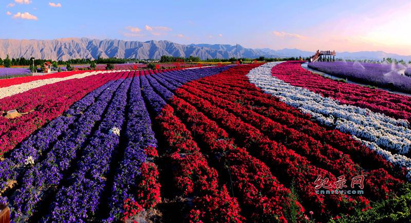白银市白银区大坪凤园花海旅游景区各类花卉争相盛开 成为观光休闲的旅游地